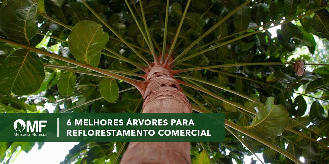 helix 6 melhores árvores para reflorestamento comercial