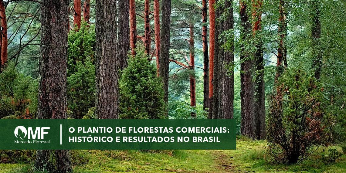 Plantio de florestas comerciais: histórico e resultados no Brasil
