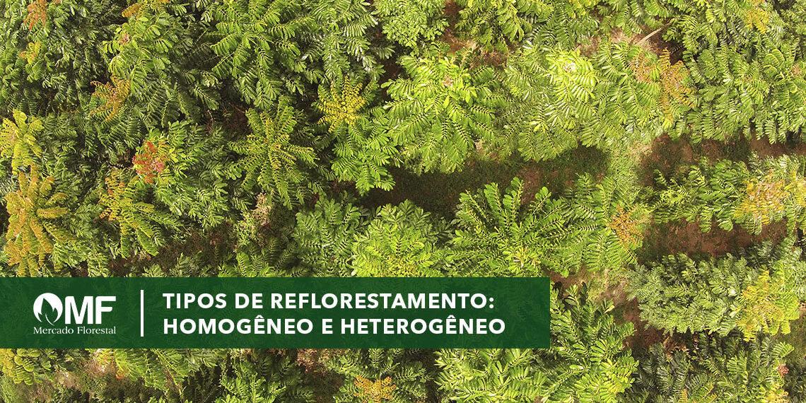 helix ripo de reflorestamento homogêneo e heterogêneo