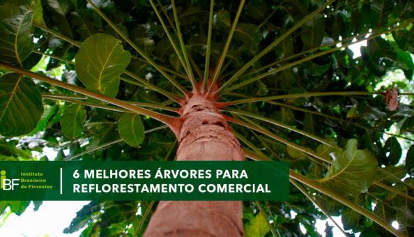 Melhores árvores para plantio comercial