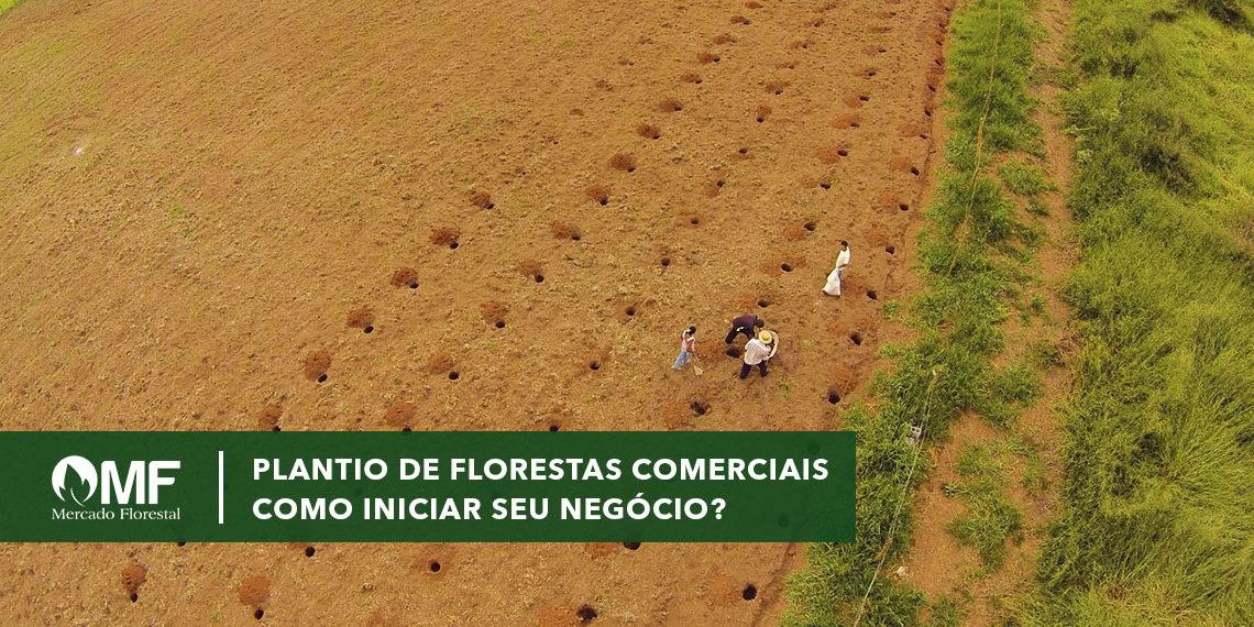 Plantio de Florestas Comerciais: como iniciar o negócio