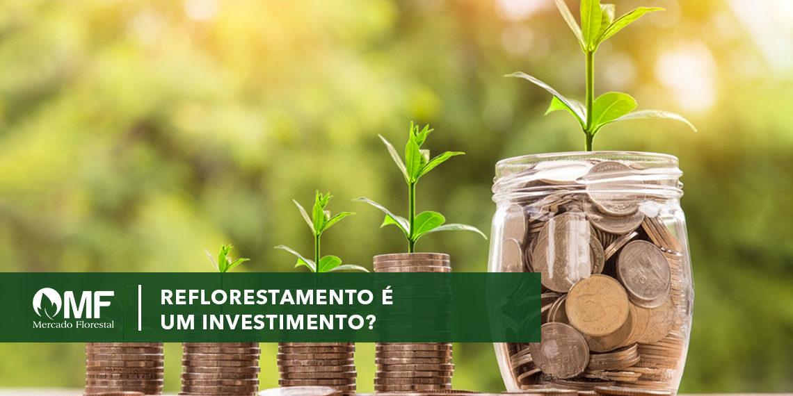 Reflorestamento é um investimento?