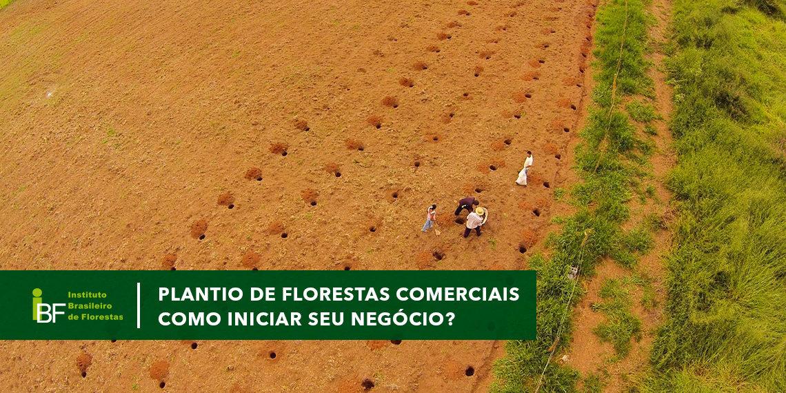 Plantio de Florestas Comerciais
