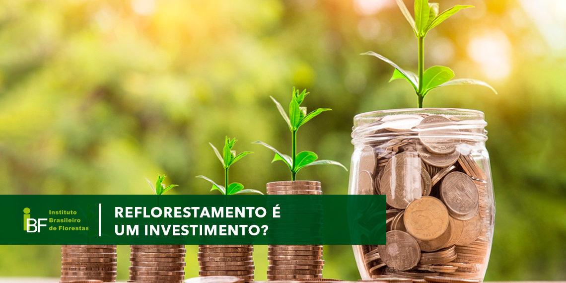 Reflorestamento é um investimento