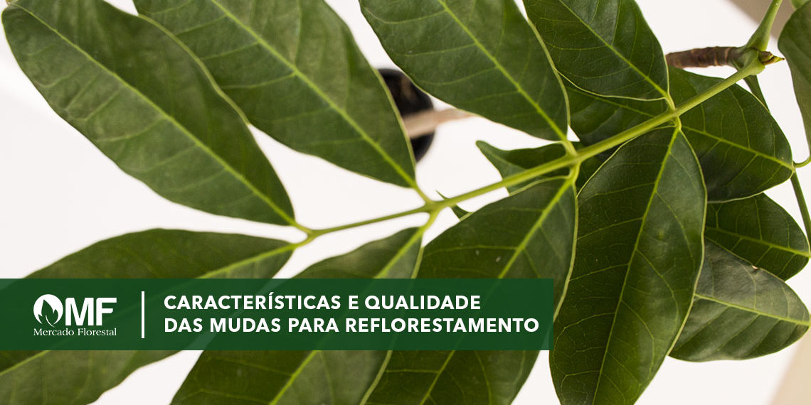 Qualidade de mudas para reflorestamento