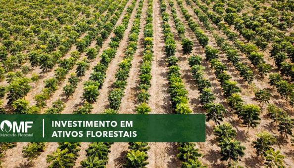 Investimento em ativos florestais