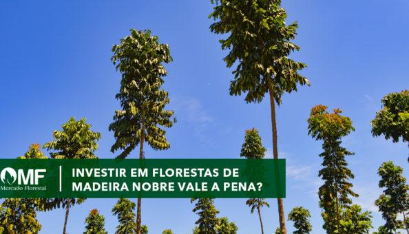 Investir em Florestas Nobres vale a pena?