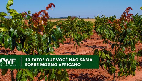 10 fatos que você não sabia sobre Mogno Africano