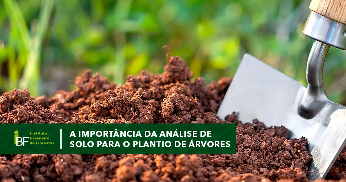 Importância da análise do solo para o plantio de árvores