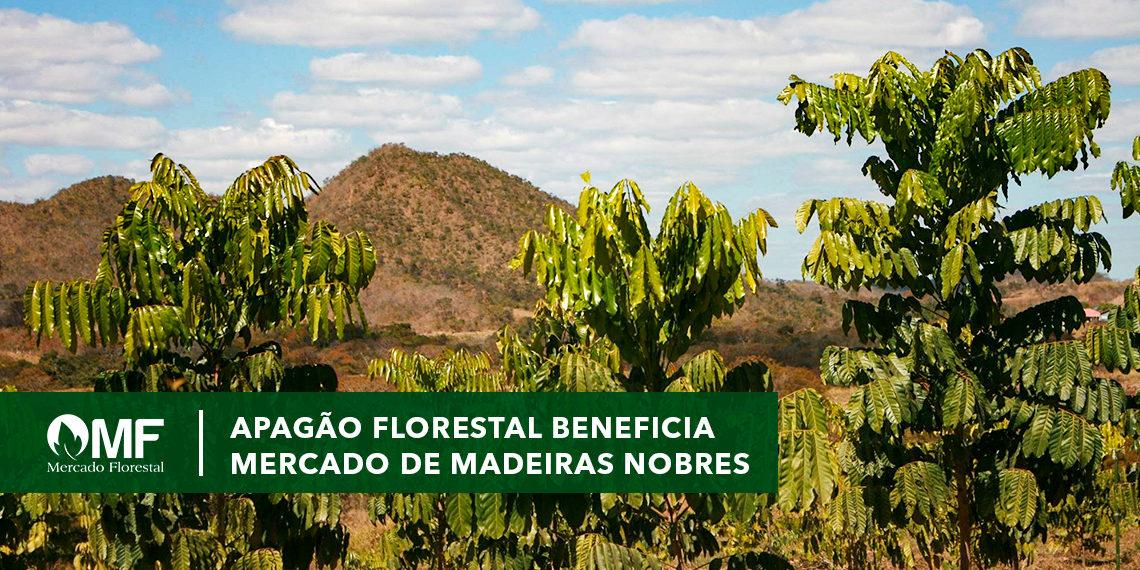 Apagão Florestal beneficia mercado de madeiras nobres
