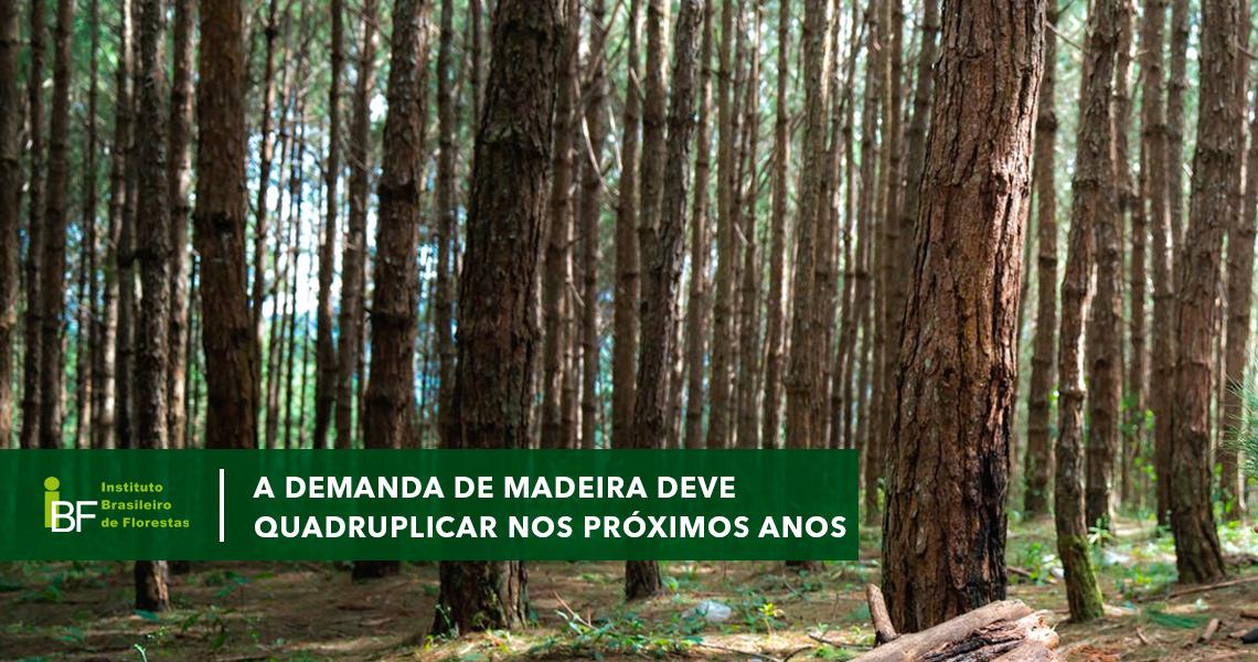 A demanda de madeira deve quadruplicar nos próximos anos