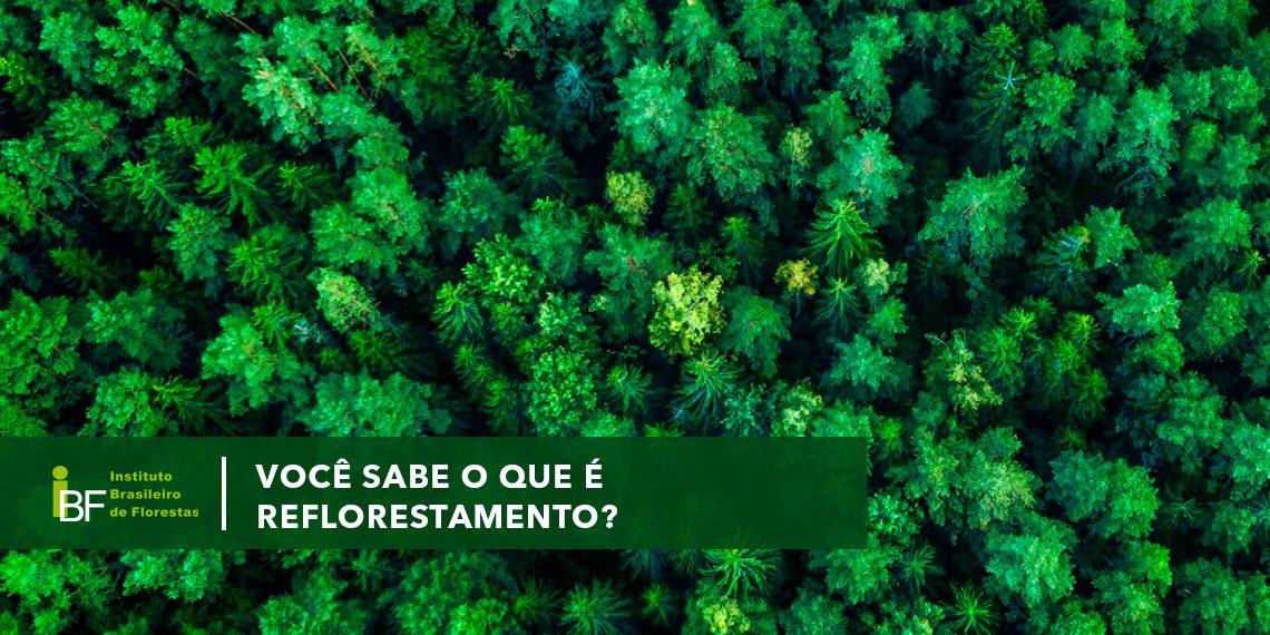 Você sabe o que é reflorestamento