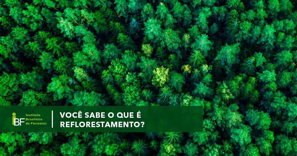 Você sabe o que é reflorestamento? Conheça todos os termos