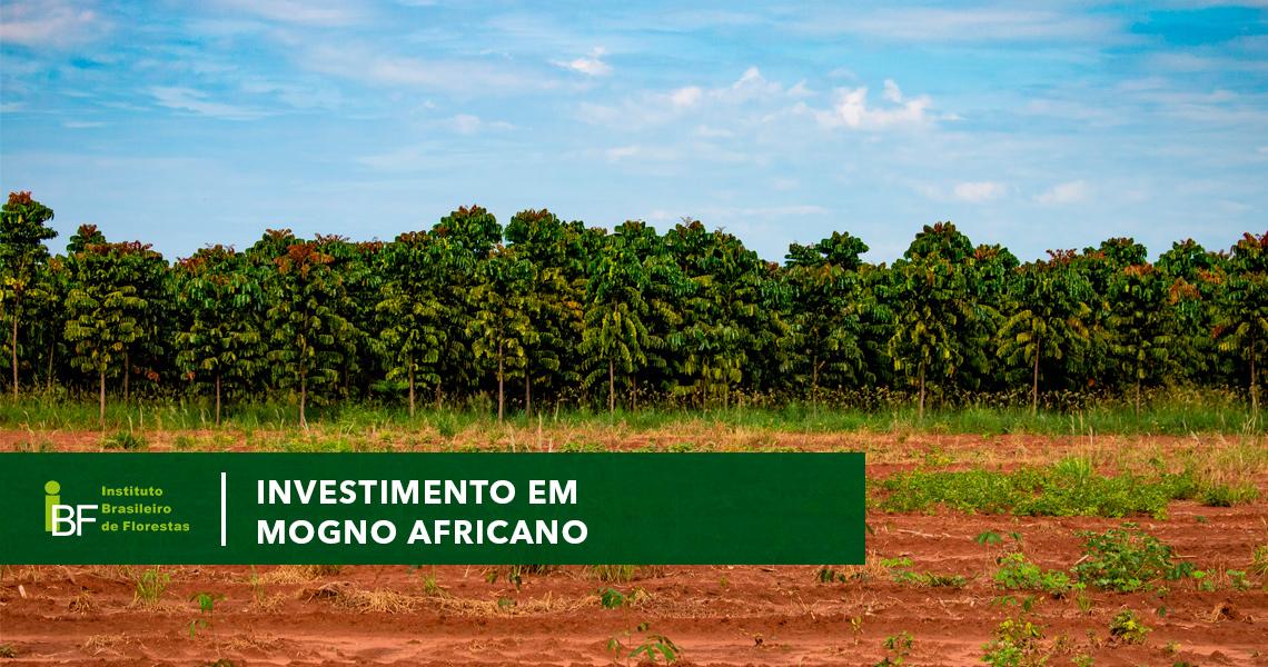 Investimento em Mogno Africano x Outras Espécies
