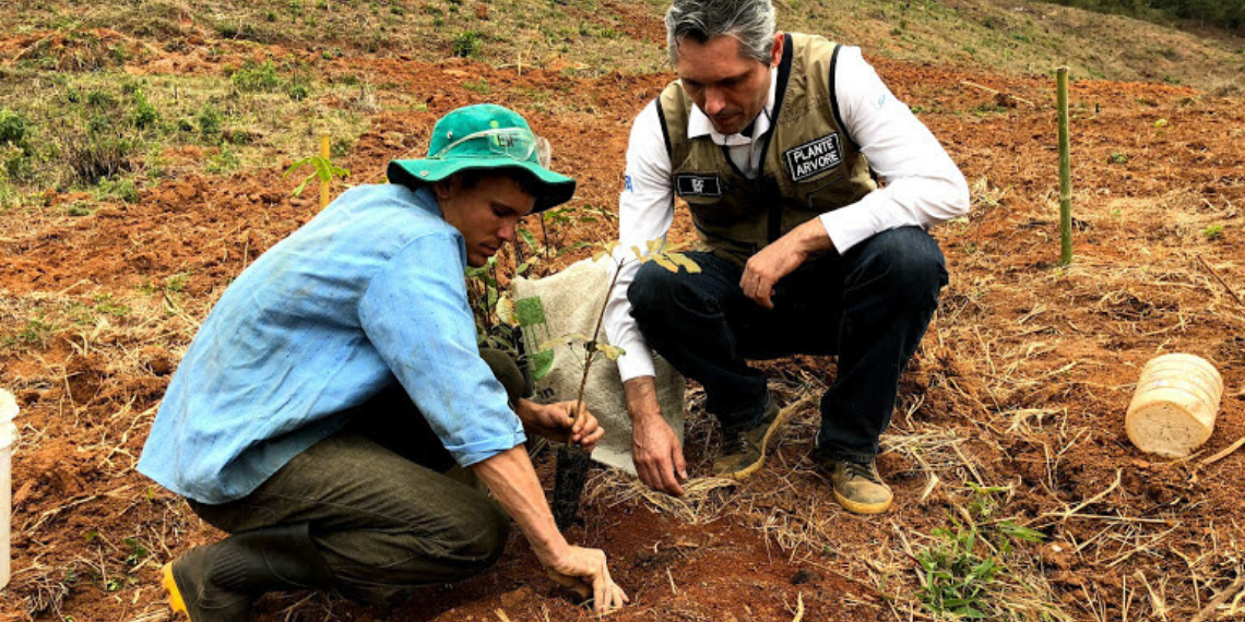 Consultoria florestal para plantio de mogno africano