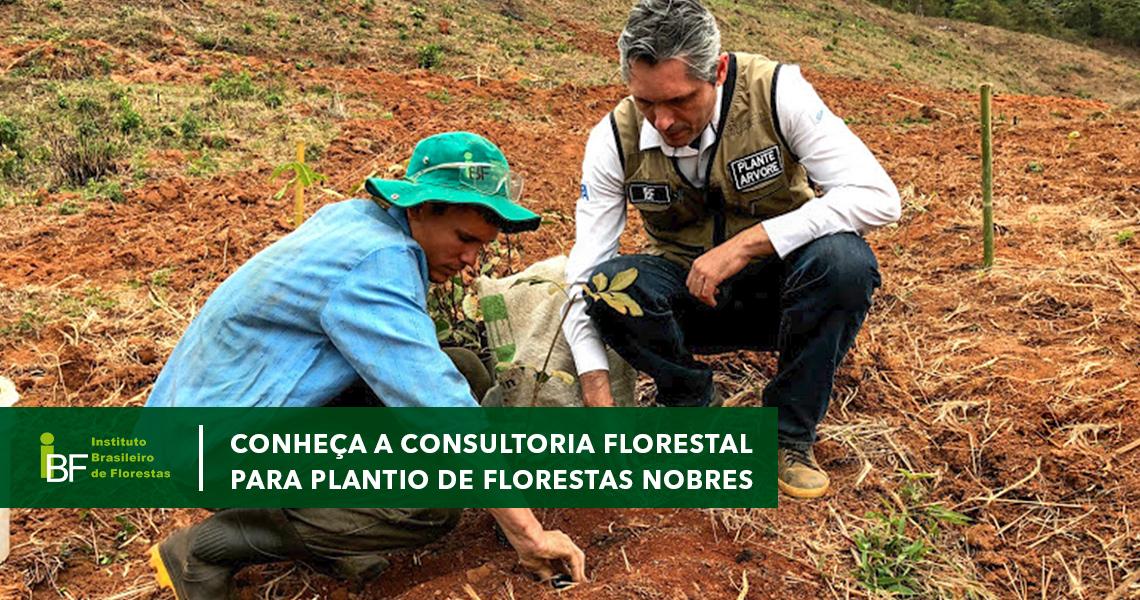 Conheça a consultoria florestal para plantio de mogno africano