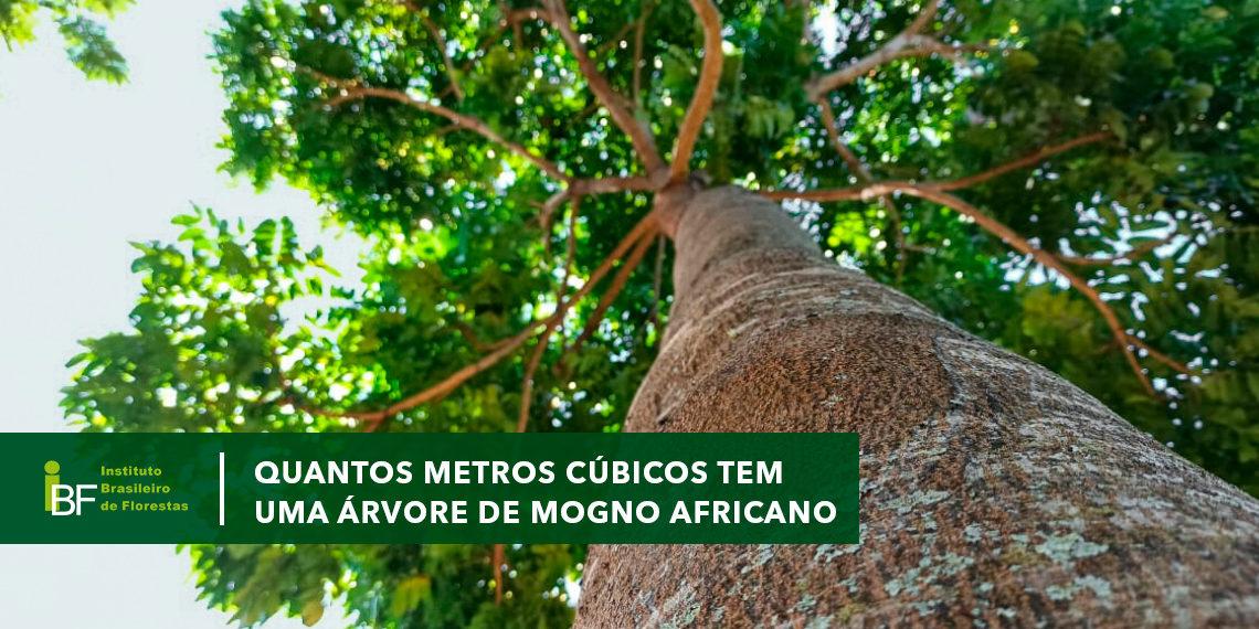Quantos metros cúbicos tem uma árvore de Mogno Africano