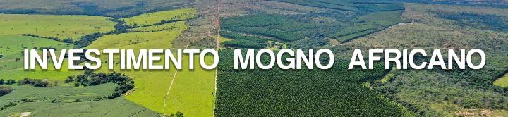 Imagem Investimento Mogno Africano