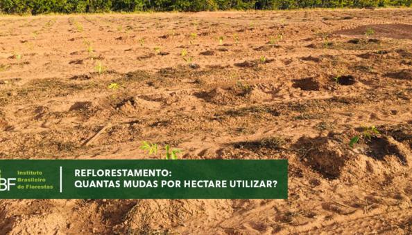 Quantas mudas por hectare utilizar