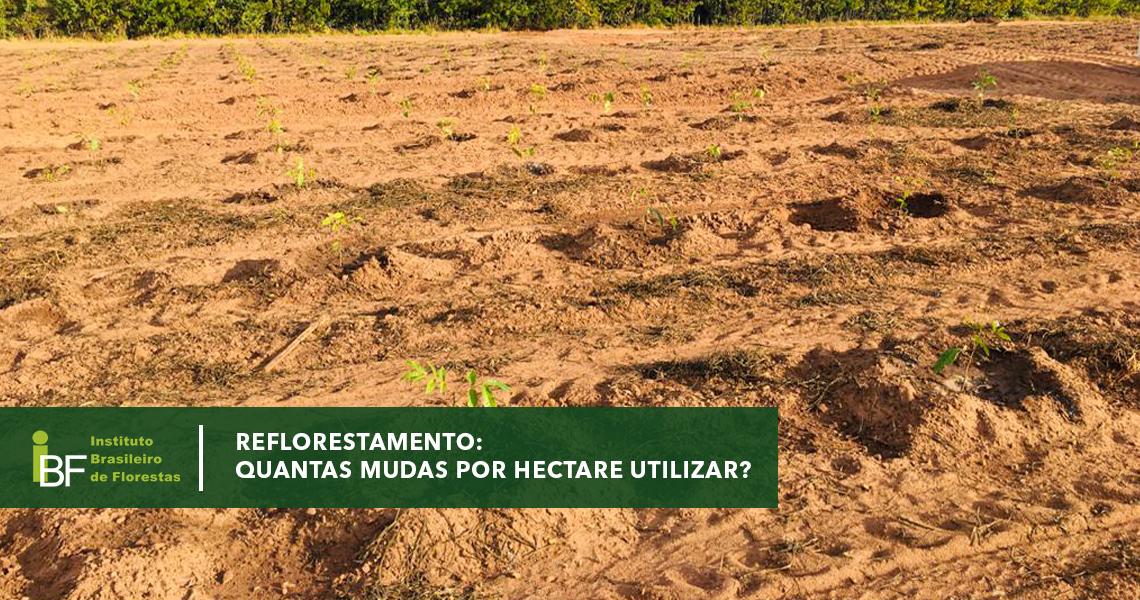 Reflorestamento: Quantas mudas por hectare utilizar?