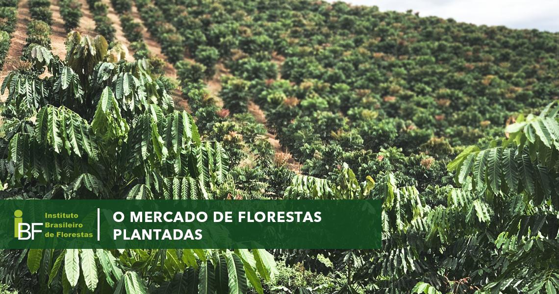 O mercado de florestas plantadas