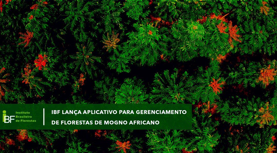 IBF lança aplicativo Minha Floresta