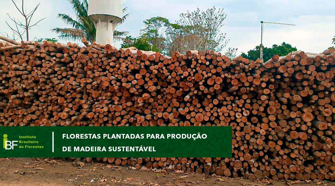 Florestas plantadas para produção de madeira sustentável